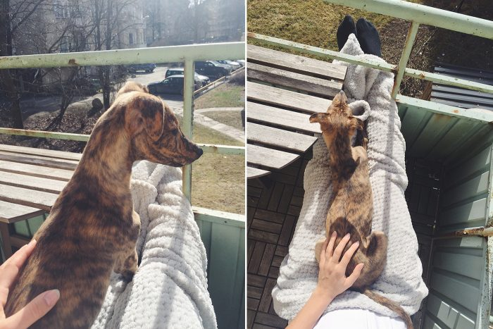 isabel-boltenstern-hundar-utan-hem-loket